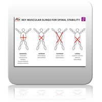 ICE Chart 3 - Key Muscular Slings